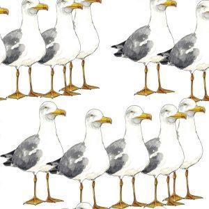 Albatross-Walk-Roller-Blinds